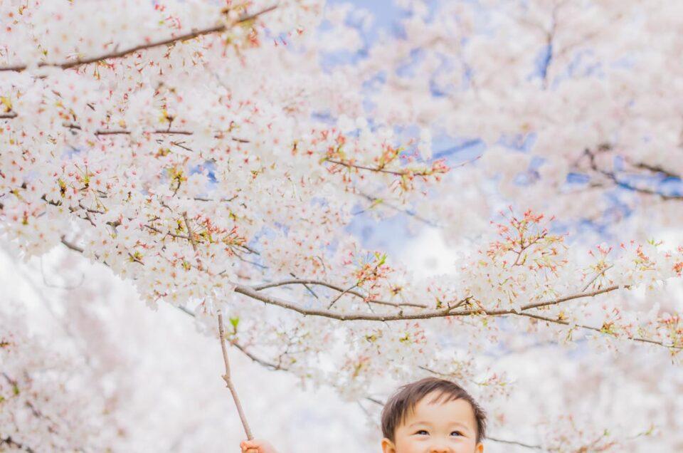 大阪 桜 ご家族・子供写真の撮影