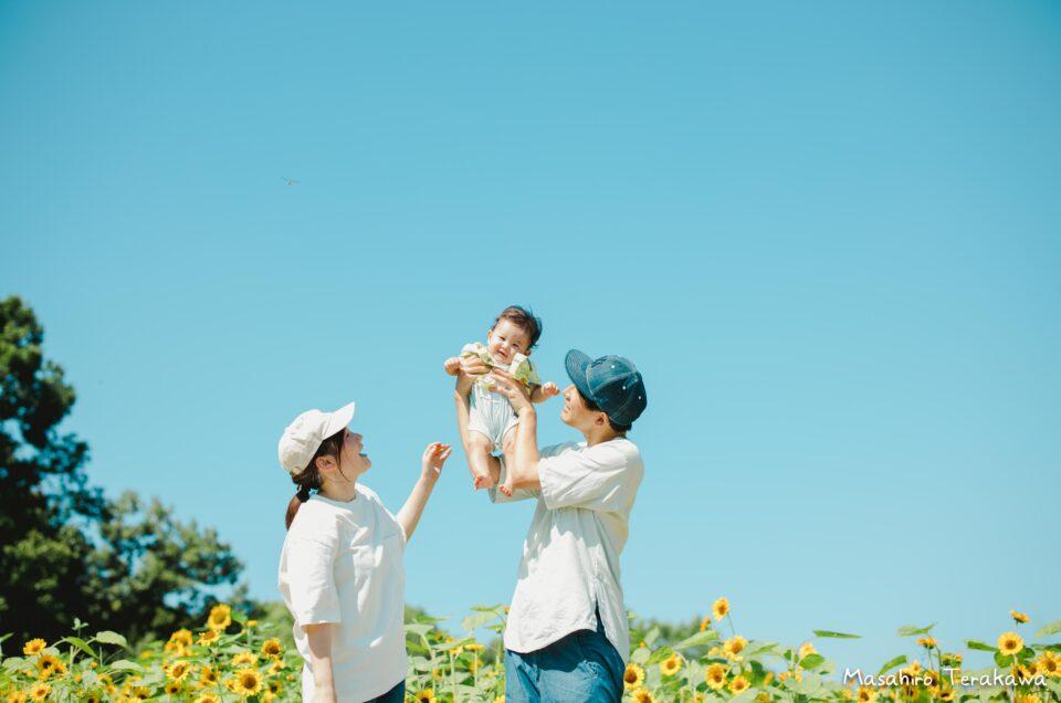 長居公園のひまわり畑で家族写真の撮影
